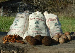 Wild harvested pine nuts, black walnuts, and hickory nuts from Pinenut.com
