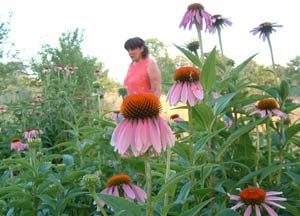 Penny Frazier, founder of PineNut.com and Goods from the Woods midst the medicinal echinacea flowers on her wild crops farm