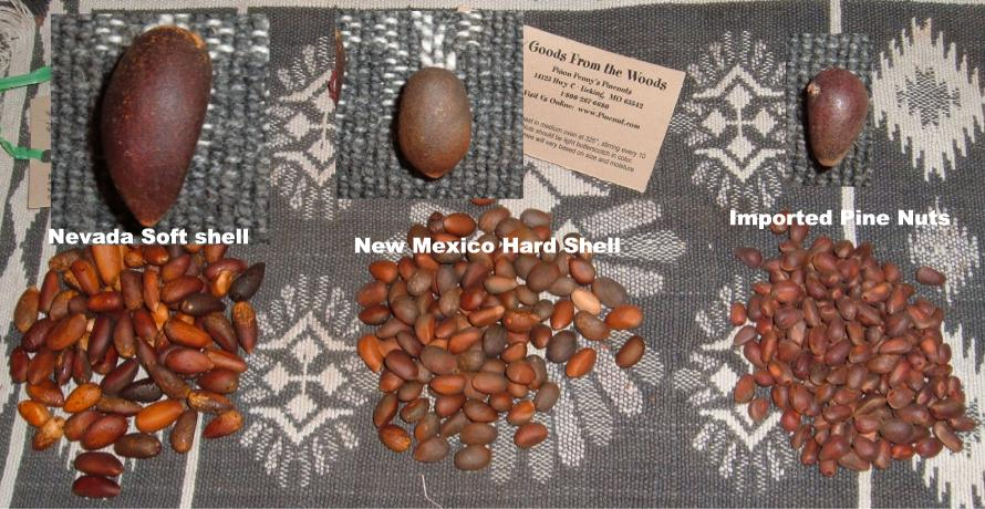 Different varieties of pine nuts: Soft Shell Pinon Pinus Monophylla from Nevada, Hard Shell Pinyon Pinus Edulis from Mexico, and imported pine nuts.>   <H2>NEVADA PINYON NUTS (Single-leaf pinon, Pinus monophylla)</H2> <P>Great Basin Pinyon Pine nuts are enjoyed for their fresh sweet, fruit like taste, extreemly large pine nut meats and the soft shell. Also called, Nevada Pinyons these nuts are extreemly large with a shell that easily cracks with a snap from your finger and thumb. Great Basin Soft shelled Pinyon nuts have a much greater ratio of nut meat to shell than any other species and it is the pine nut for people seeking